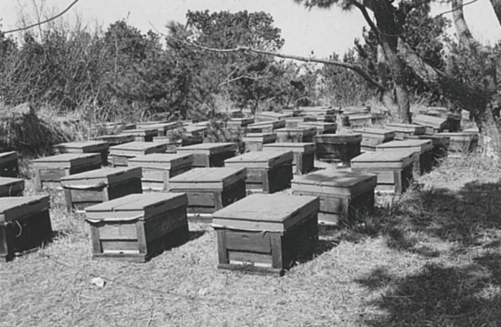 水谷養蜂園の歴史は3箱のみつばちから始まりました